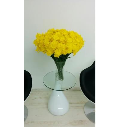 נרקיס צהוב