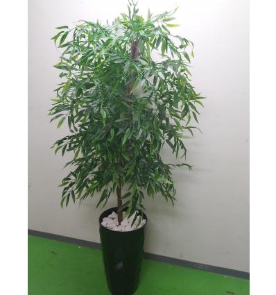 עץ במבוק 1.80