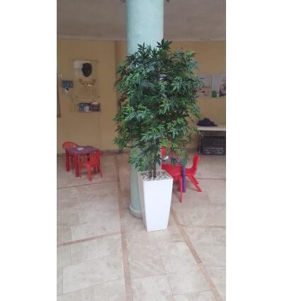 עץ גראס