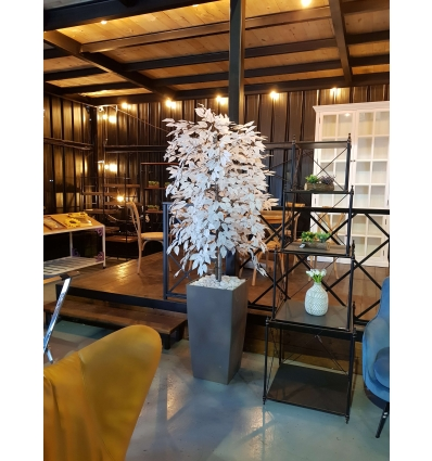 עץ הלבנה מבית סחלבים