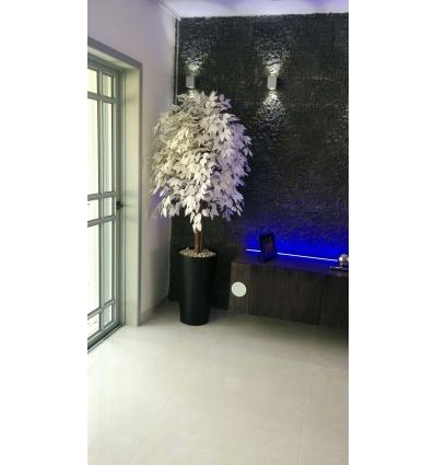 עץ הלבנה