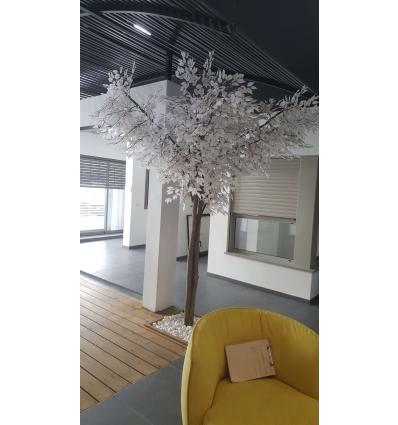 עץ הלבנה 2 וחצי מטר