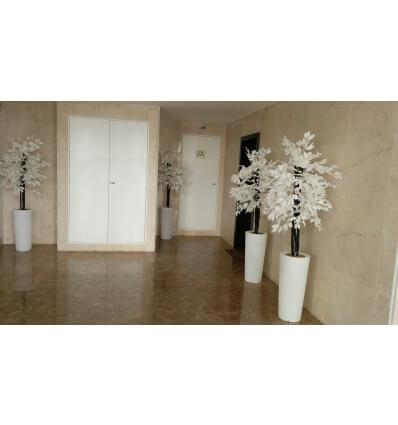 עץ הלבנה 1.50 מטר