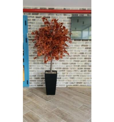 עץ מייפל אדום
