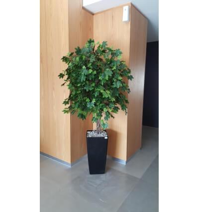 עץ מייפל ירוק 180