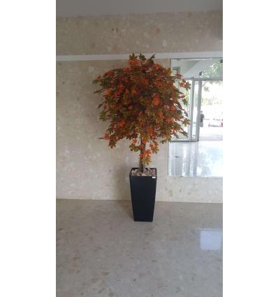 עץ מייפל מגוון עלים מבית סחלבים