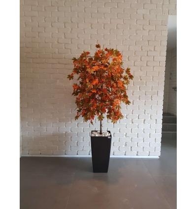 עץ מייפל מגוון עלים