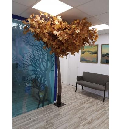 עץ מייפל עתיק 2.5 מטר