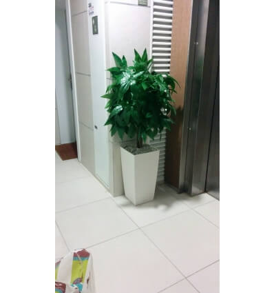 עץ קיקיון