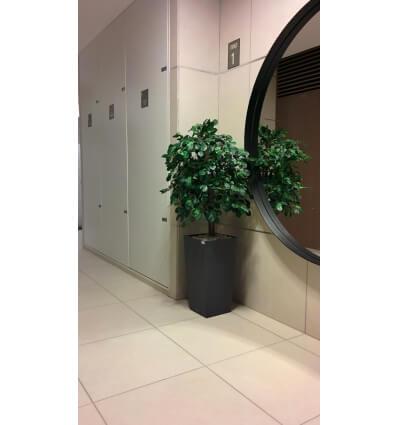 עץ שיננטוס מלאכותי ירוק