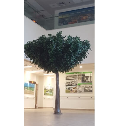 עץ שיננטוס