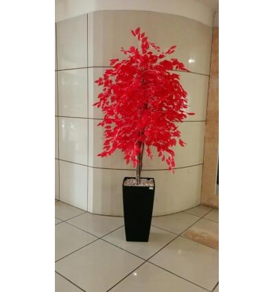 עץ שמש אדומה