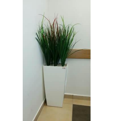 עשב ירוק טבעי