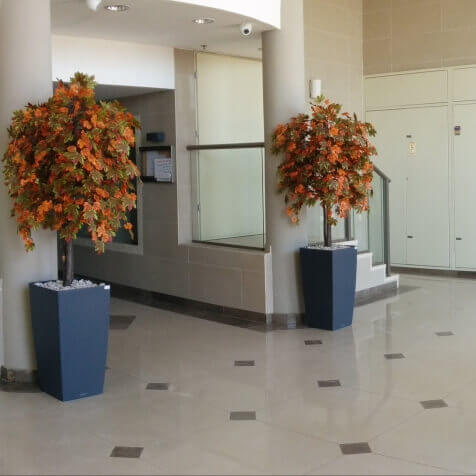 צמחיה מלאכותית לבניין משותף - סחלבים