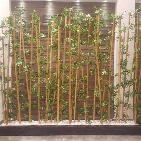 קני במבוק יפני - סחלבים