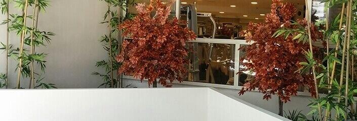 צמחייה מלאכותית צמודת חלון - סחלבים