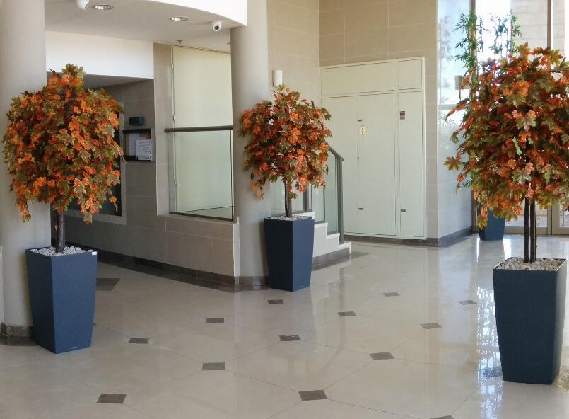 עצי שלכת יפני בבניין משותף רחובות